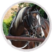 Bay Pinto Amish Buggy Horse Round Beach Towel