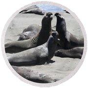 Beachmasters - Elephant Seals Round Beach Towel