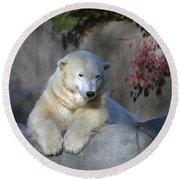 Bear 3789 Round Beach Towel
