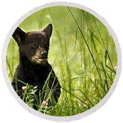 Bear Cub In Clover Round Beach Towel