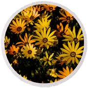 Beautiful African Daisies Round Beach Towel