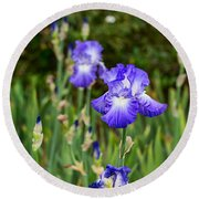 Beautiful And Colorful Iris. Round Beach Towel