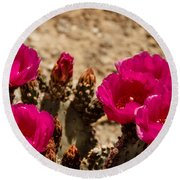 Beautiful Beavertail Cactus Round Beach Towel