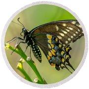 Beautiful Black Swallowtail Round Beach Towel