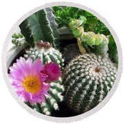 Beautiful Blooming Cactuses Round Beach Towel