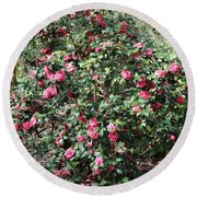 Beautiful Camellia Bush Round Beach Towel