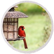 Beautiful Cardinal Round Beach Towel