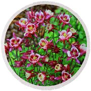 Beautiful Columbine   Round Beach Towel