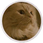 Beautiful Creamy Persian Cat Mix Portrait Round Beach Towel