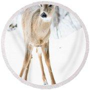 Beautiful Deer Round Beach Towel