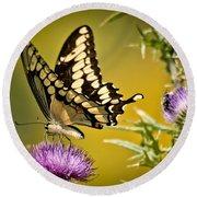 Beautiful Golden Swallowtail Round Beach Towel