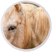 Beautiful Gray Horse Portrait Round Beach Towel