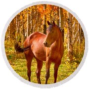Beautiful Horse In The Autumn Aspen Colors Round Beach Towel by James BO  Insogna