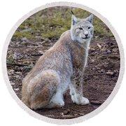Beautiful Lynx Round Beach Towel