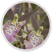 Beautiful Mtssa. Shelob 'tolkien' - Orchids - Mericlone  Round Beach Towel