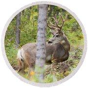 Beautiful Mule Deer Buck With Velvet Antler  Round Beach Towel