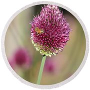 Beautiful Pink Flower With Bee Round Beach Towel