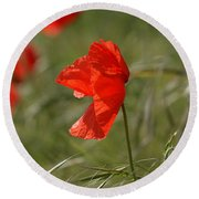 Beautiful Poppies 5 Round Beach Towel