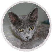 Beautiful Portait Of A Grey Russian Tabby Cat Round Beach Towel