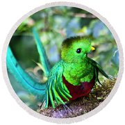 Beautiful Quetzal 5 Round Beach Towel