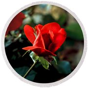 Beautiful Red Rose Bud Round Beach Towel by Robert Bales