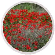 Beautiful Red Wild Anemone Flowers In A Spring Field Round Beach Towel
