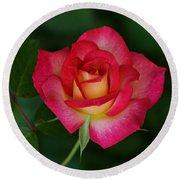 Beautiful Rose Round Beach Towel by Sandy Keeton