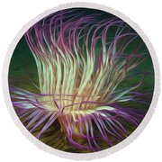 Beautiful Sea Anemone 1 Round Beach Towel by Lanjee Chee