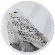 Beautiful Snowy Owl Round Beach Towel