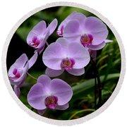 Beautiful Violet Purple Orchid Flowers Round Beach Towel