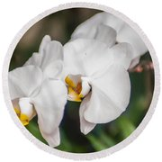 Beautiful White Orchids Flower Bloom Round Beach Towel
