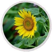 Beautiful Yellow Sunflower In Full Bloom Round Beach Towel