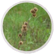 Prickly Histle Beauty Among The Grasses Round Beach Towel