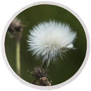 Beauty Among The Thistles Round Beach Towel