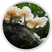 Beauty Of Mushrooms Argentina Round Beach Towel