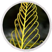 Beauty Of Nature Fern 3 Round Beach Towel
