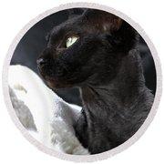 Beauty Of The Rex Cat Round Beach Towel