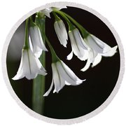 Beauty Of The Snowdrops Round Beach Towel