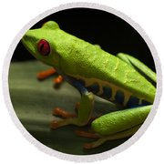 Beauty Of Tree Frogs Costa Rica 2 Round Beach Towel