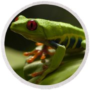 Beauty Of Tree Frogs Costa Rica 3 Round Beach Towel