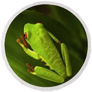 Beauty Of Tree Frogs Costa Rica 6 Round Beach Towel