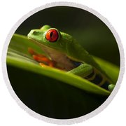 Beauty Of Tree Frogs Costa Rica 7 Round Beach Towel