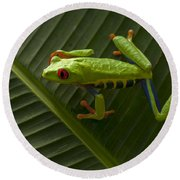 Beauty Of Tree Frogs Costa Rica 8 Round Beach Towel
