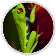 Beauty Of Tree Frogs Costa Rica 9 Round Beach Towel