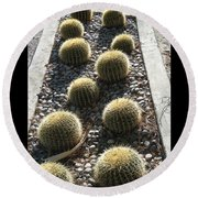 Bed Of Barrel Cacti  Round Beach Towel