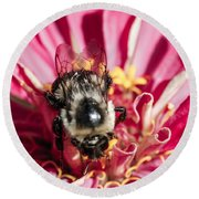 Bee Close Up On Pinkish Red Flower Round Beach Towel