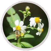 Bee-flower Pollen Round Beach Towel