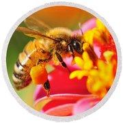Bee Laden With Pollen Round Beach Towel