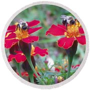 Bees On A Marigold 4 Round Beach Towel