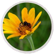 Bee On A Smooth Oxeye Round Beach Towel
